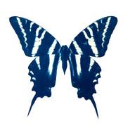 cyan_butterfly_04.jpg