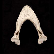 Bones_05.jpg