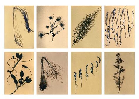 Flora&Fauna_grid_05.jpg