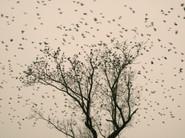 Starlings_04.jpg