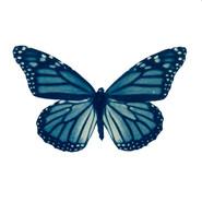 cyan_butterfly_08.jpg