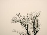 Starlings_08.jpg