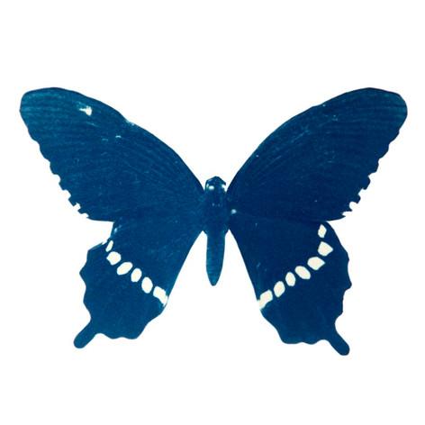 cyan_butterfly_03.jpg