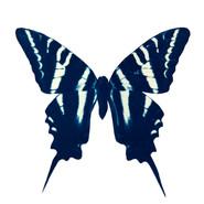 cyan_butterfly_11.jpg