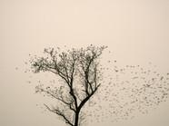 Starlings_07.jpg
