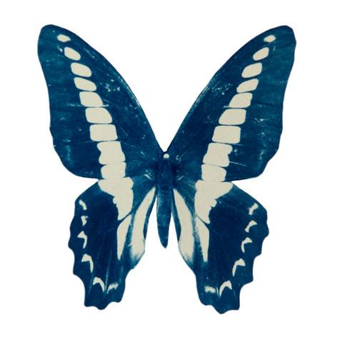 cyan_butterfly_10.jpg