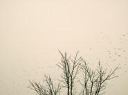 Starlings_09.jpg