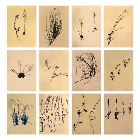 Flora&Fauna_grid_03.jpg
