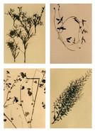 Flora&Fauna_grid_004.jpg