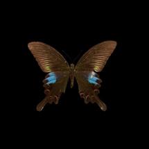 butterfly_06.jpg