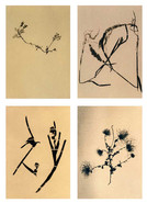 Flora&Fauna_grid_005.jpg
