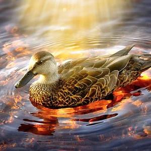 Healing from Anguish.....