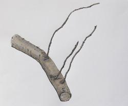 Small quick stick study - leylandii