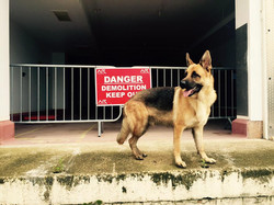 K9 Security dog, security, dog patrol, alarm response, static security, security company, somerset,