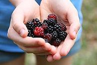 Blackberries-6383.jpg
