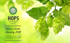Hops Wallpaper.png