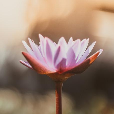 5 Strategien für innere Ruhe und Stabilität