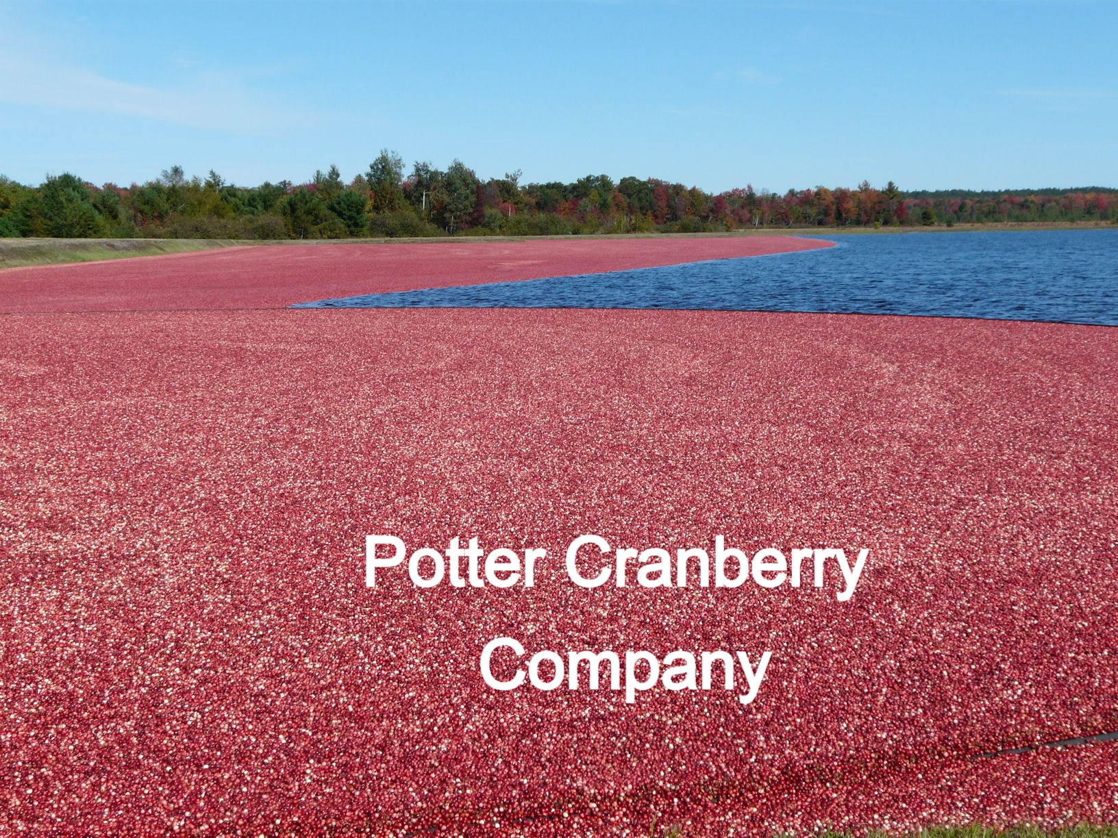 POTTER CRANBERRY COMPANY