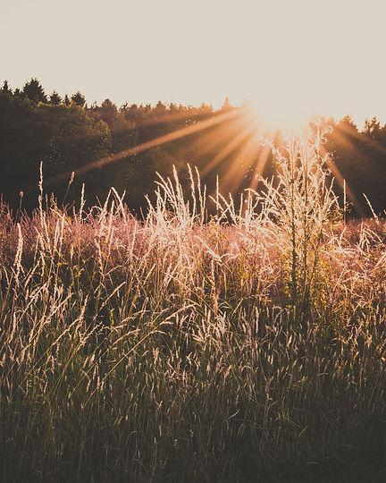 agriculture-barley-cereal-1272367.jpg
