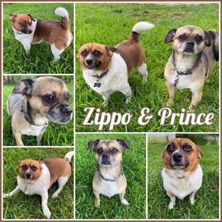 Zippo and Prince