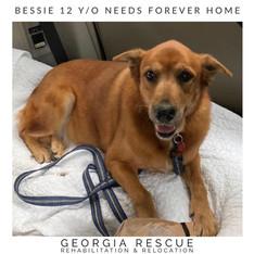 Bessie 12 Y/O