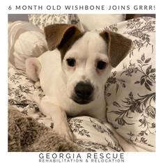 Adoption Pending Wishbone 6 M/O