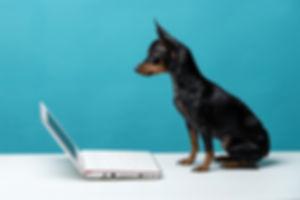 Cute dog who enjoy the laptop computer o
