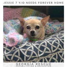 Adoption Pending Jessie 7 Y/0