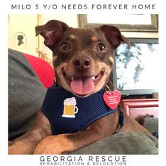 Milo 5 Y/O