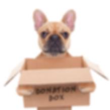 french bulldog dog holding a donation bo