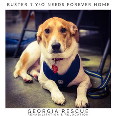 Adoption Pending Buster 1 Y/O