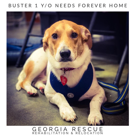 Buster - One Y/O