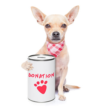 chihuahua dog with a donation can , coll