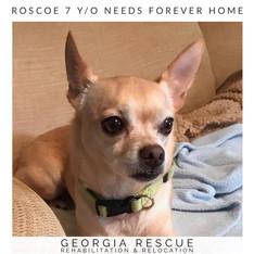 Roscoe 7 Y/O
