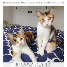 Magnolia & Marigold 3 Y/O