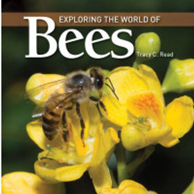 Exploring The World Of Bees   Product Code: BM-790