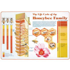Life Cycle Chart   Product Code: BM-335