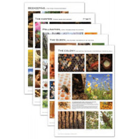 Beekeeping Posters - Set of 5   Product Code: BM-265