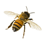 bee-png-photo-bee-png-647_647.png