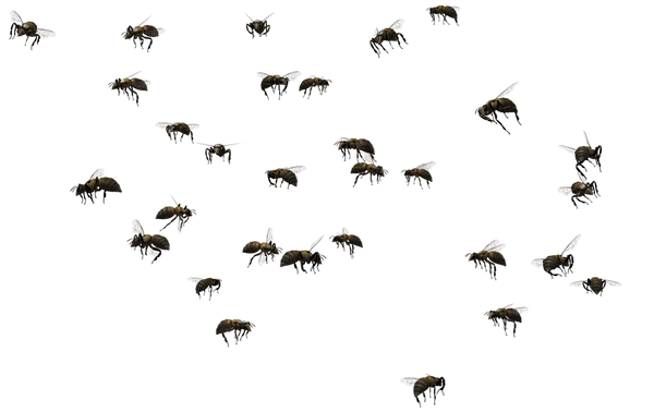 swarm-of-bees-clipart-2 (1).png