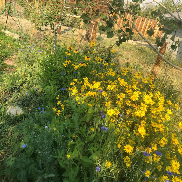 Wildflower meadow gardens