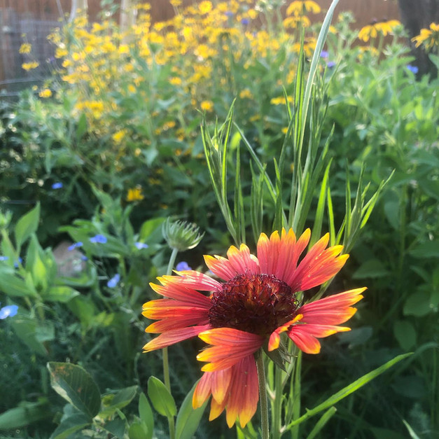 Native, edible and drought-tolerant forest gardens