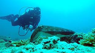 Sam Stewart Underwater Photography