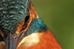 Filming Kingfishers Mk 2