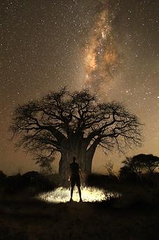 Sam Stewart Wildlife Cameraman