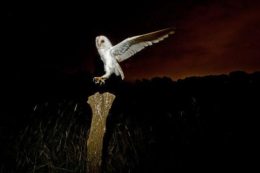 Sam Stewart Barn Owl Photography