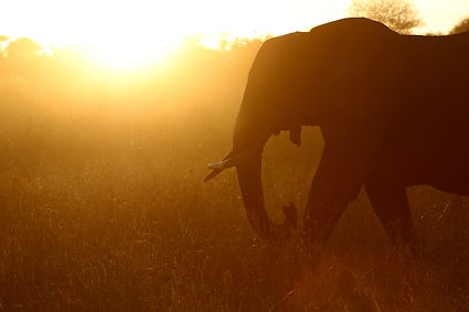 Sam Stewart Africa Photography