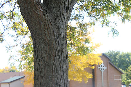 Heritage in the fall