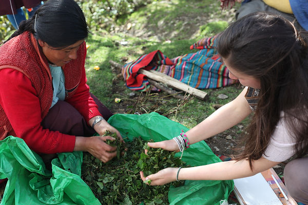 Picking through leaves used for plant dyes
