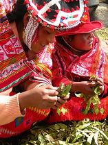 Weavers processing plants
